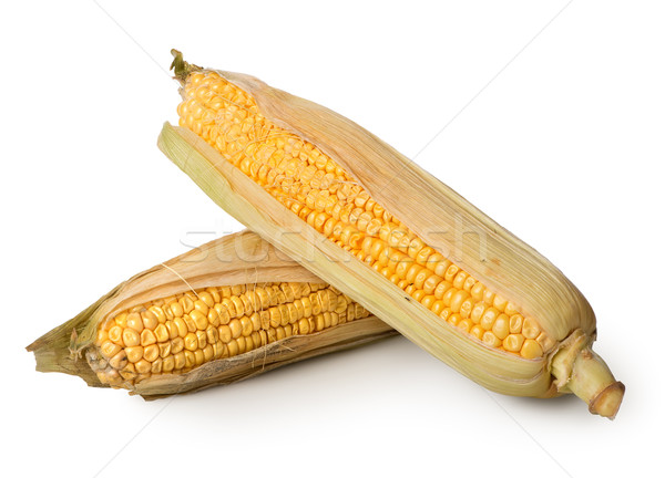 Two ears of corn Stock photo © Givaga