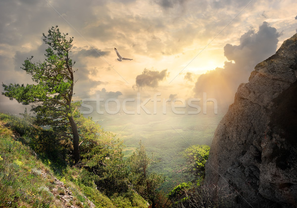 Tree on the mountain Stock photo © Givaga