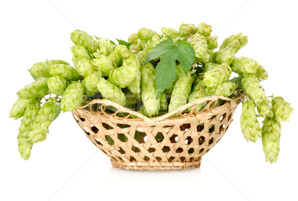 Stock photo: Hops in a basket isolated
