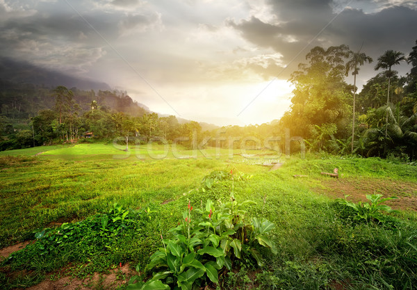 Field in jungles Stock photo © Givaga