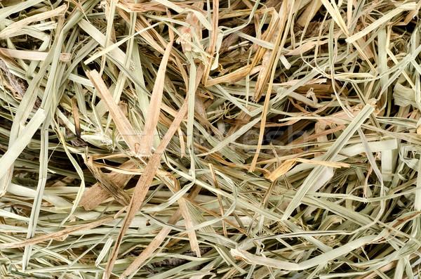 Prairie foin sécher animal alimentaire nature Photo stock © Givaga