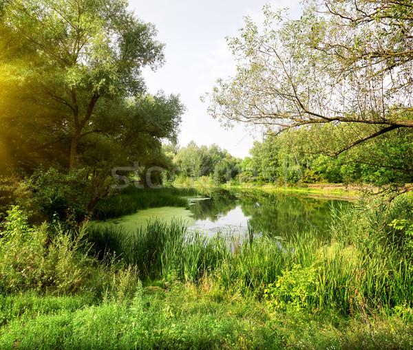 Idilli tájkép folyó erdő napos reggel Stock fotó © Givaga