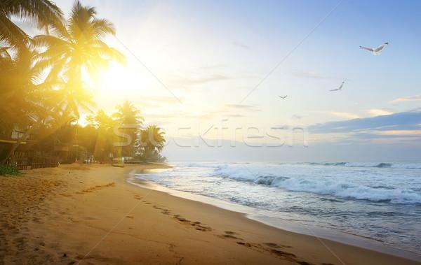 Costa océano indio puesta de sol Sri Lanka cielo Foto stock © Givaga