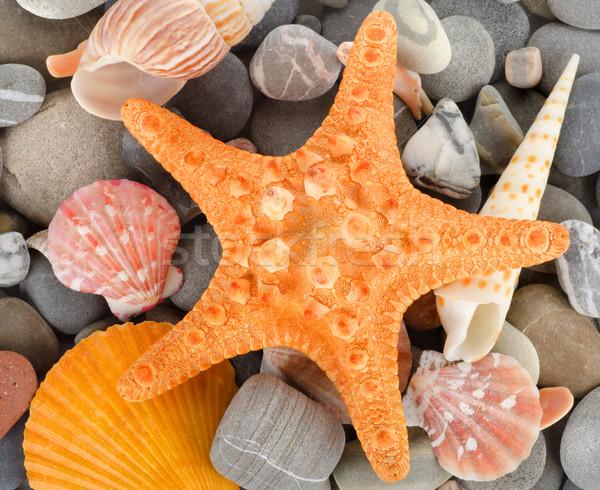 Stok fotoğraf: Deniz · kabukları · taş · yaz · kabuk