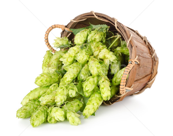 Hops in a wooden basket Stock photo © Givaga