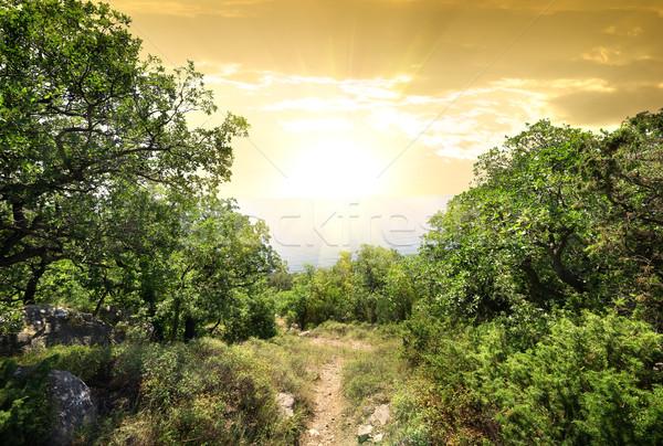 Zonlicht berg bos magie groene boom Stockfoto © Givaga