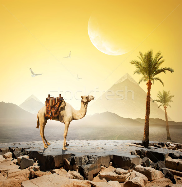 Camel and moon Stock photo © Givaga