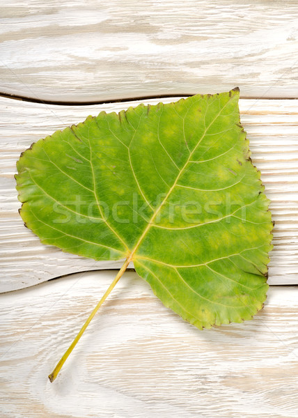 Poplar leaf on a wooden background Stock photo © Givaga