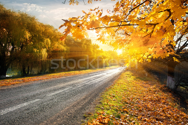 Highway and autumn Stock photo © Givaga