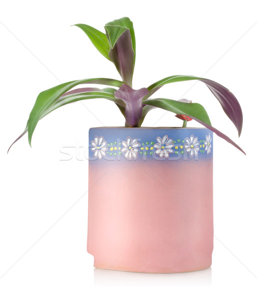 Flower in a ceramic pot Stock photo © Givaga
