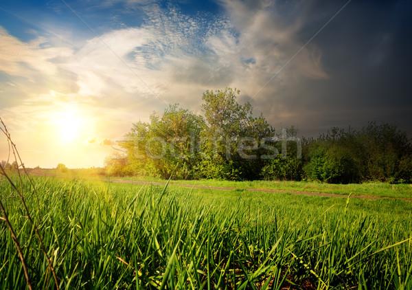 Vidéki út fiatal fák szürkület nap naplemente Stock fotó © Givaga