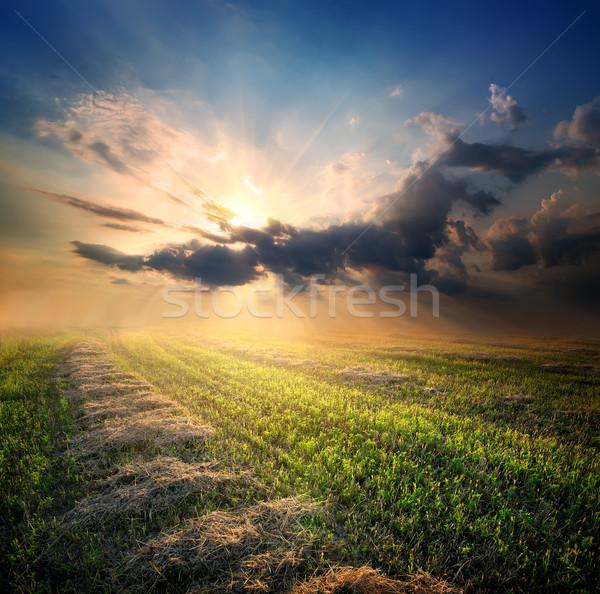 Beveled field of wheat Stock photo © Givaga