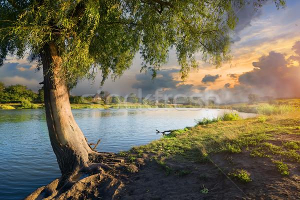 Osier and fog Stock photo © Givaga