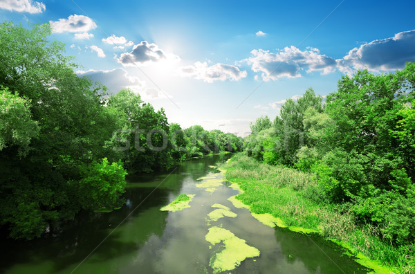River and forest Stock photo © Givaga