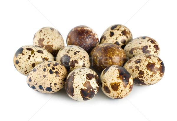 Quail eggs Stock photo © Givaga