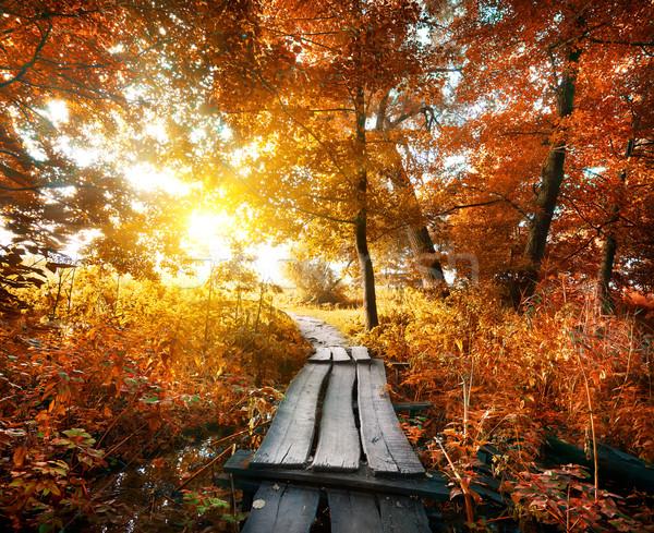 Autumn and bridge Stock photo © Givaga
