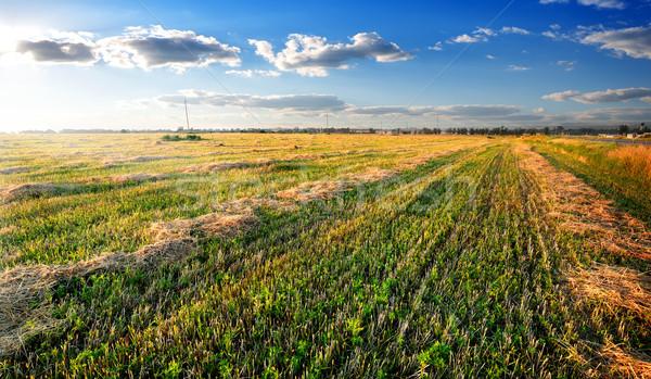 сено области Солнечный осень день небе Сток-фото © Givaga