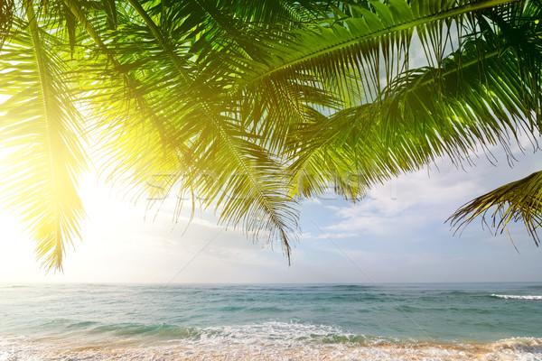 Pálmafák óceán napfelkelte indiai napos reggel Stock fotó © Givaga
