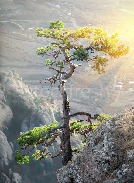 Tree on the rock Stock photo © Givaga