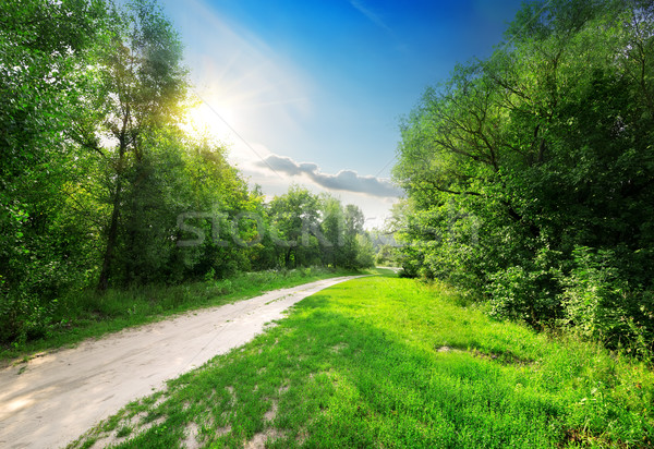 Country road into forest Stock photo © Givaga