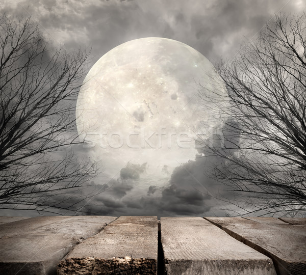 Forest with full moon Stock photo © Givaga