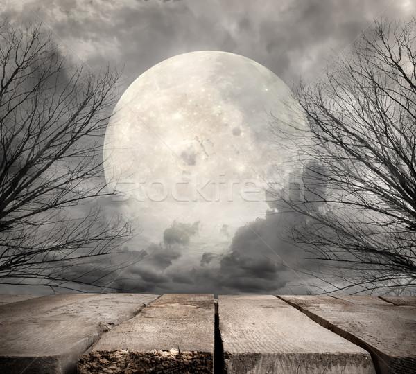 Lasu pełnia księżyca elementy obraz drzewo Zdjęcia stock © Givaga
