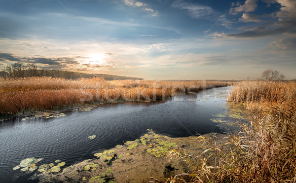 Autumn river and reeds Stock photo © Givaga