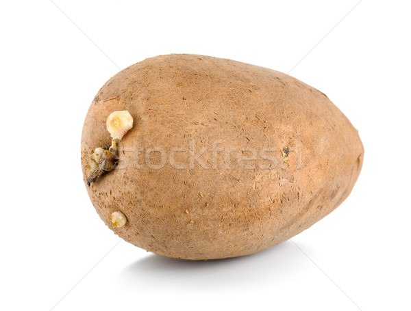 One raw potatoe isolated Stock photo © Givaga