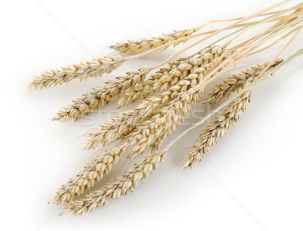Stalks of wheat Stock photo © Givaga