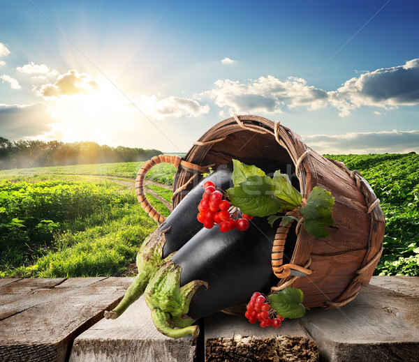 Eggplants and landscape Stock photo © Givaga