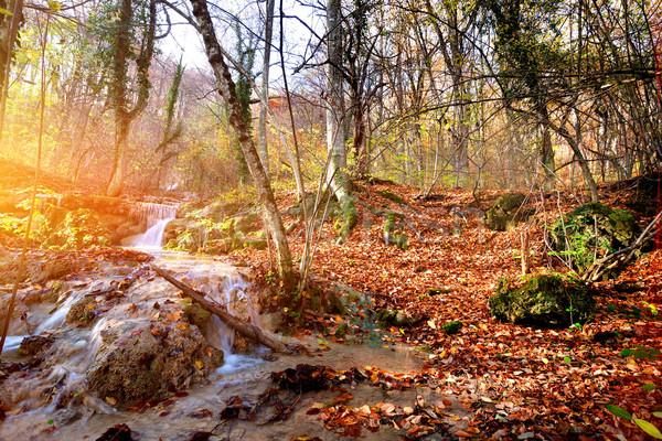Hegy patak ősz erdő napfelkelte fa Stock fotó © Givaga