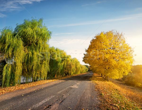 Road through autumn forest Stock photo © Givaga
