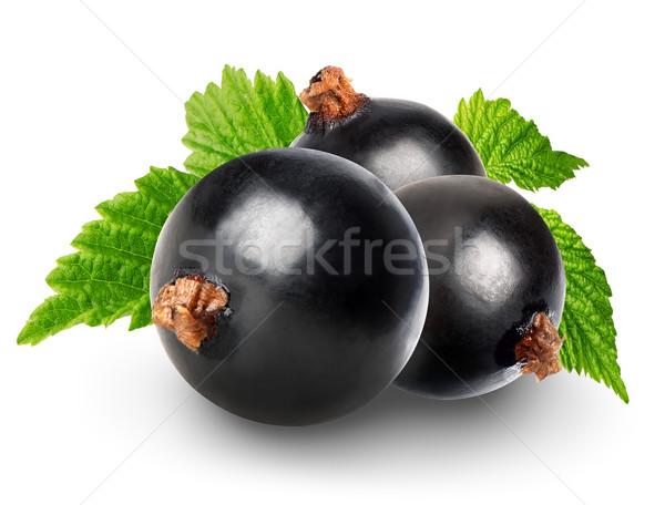 Black currant Stock photo © Givaga