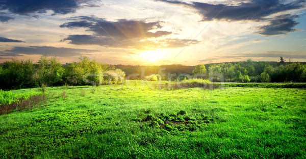 Green grass and trees Stock photo © Givaga