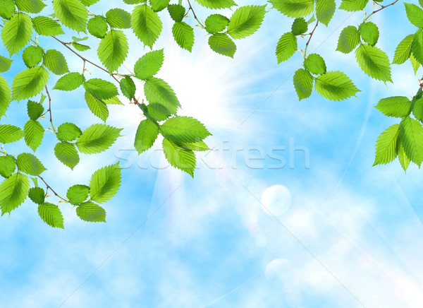 Green leaf opposite sun and sky Stock photo © Givaga