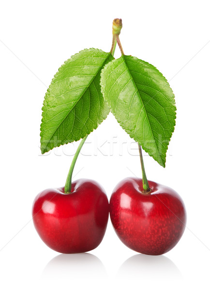 Two cherries isolated Stock photo © Givaga