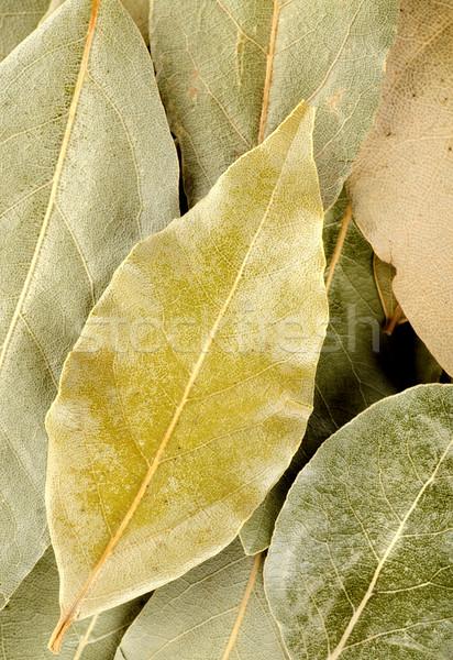 Függőleges babérlevél egyezség levelek különböző levél Stock fotó © Givaga
