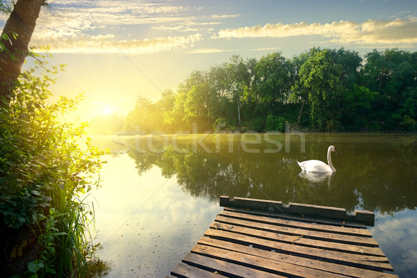 Graceful swan on river Stock photo © Givaga