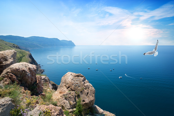 Stock photo: Gull over the sea
