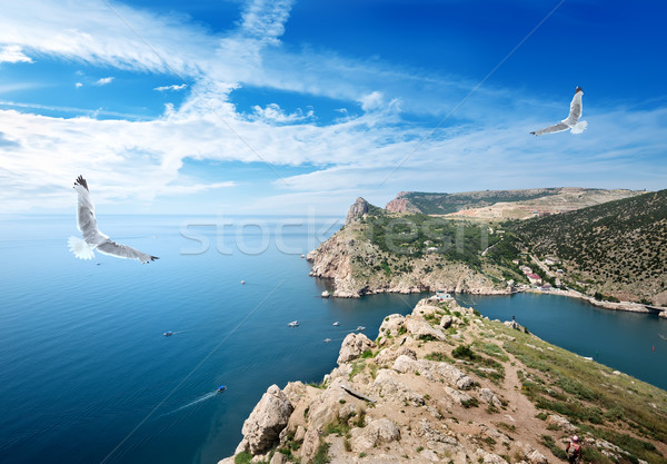 Two gulls over the sea Stock photo © Givaga