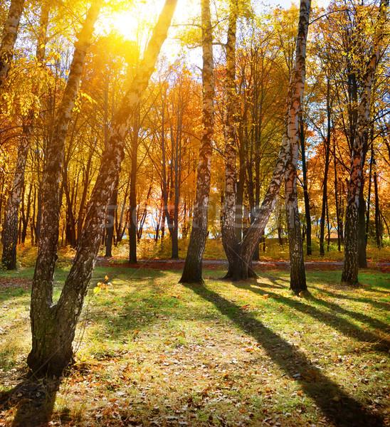 Autumn park Stock photo © Givaga