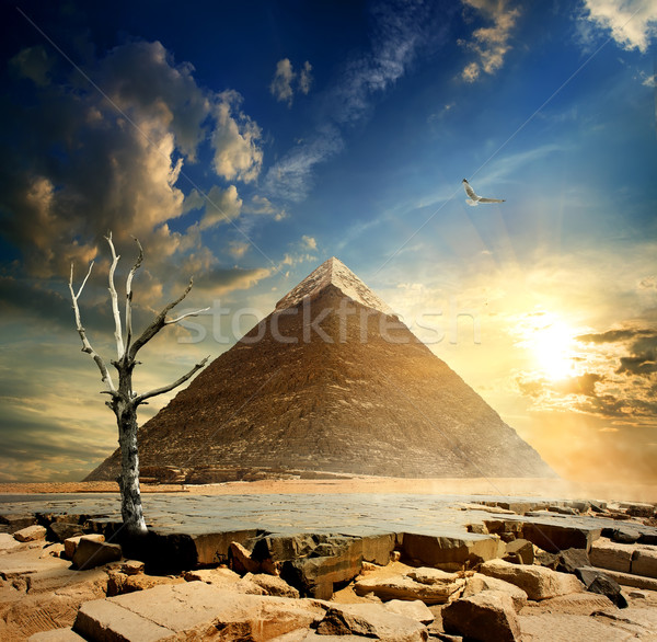 Pyramid and dry tree Stock photo © Givaga