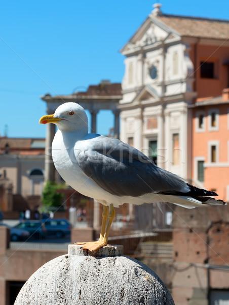Gaviota Roma Italia aves azul urbanas Foto stock © Givaga