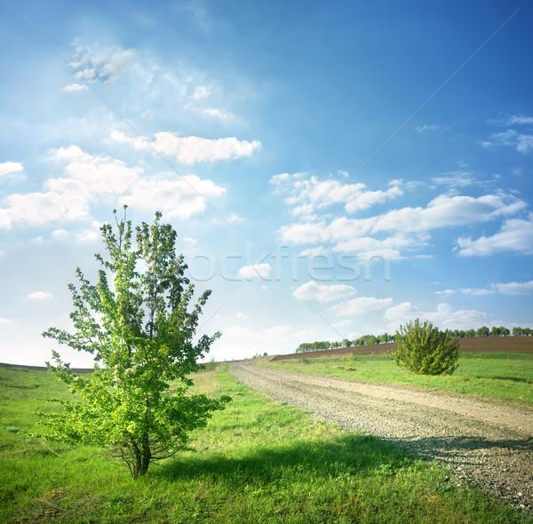 Fa vidéki út tavasz zöld fa fű nap Stock fotó © Givaga
