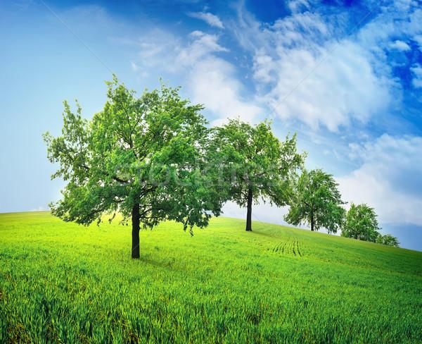 Fák mező zöld tavasz égbolt fa Stock fotó © Givaga