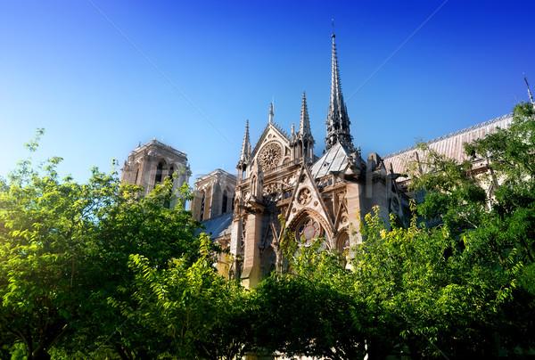Cattedrale alberi Parigi Francia albero Foto d'archivio © Givaga
