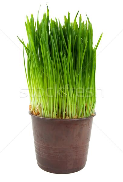 Green Grass Stock photo © Givaga