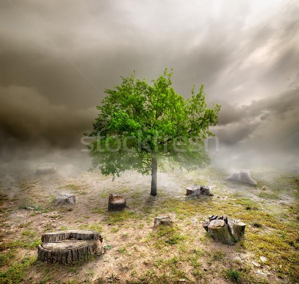 Foto stock: Nublado · dia · céu · árvore · madeira