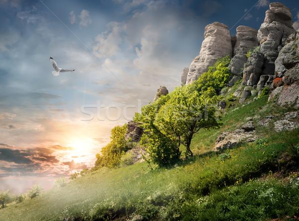Trees on mountain Stock photo © Givaga