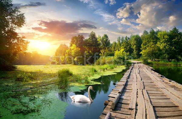 лебедя моста реке закат воды Сток-фото © Givaga